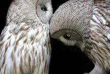 Owls / by Aries