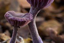 Woodlands/Fungis
