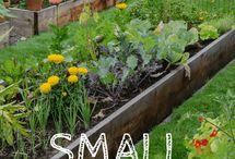 Garden, small