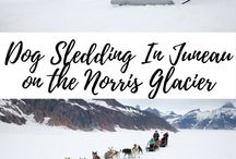 Arctic Adventures / 0