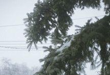 Winter Survival & Prepping
