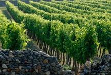 Vins de Loire - Loire Valley wines / Sélection de vins de Val de Loire More about Loire valley wines