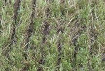 Rasen erneuern