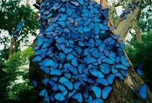Textiles Rainforest Bag Project