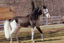 Horses to paint