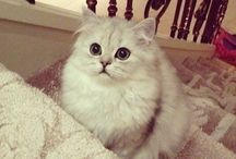 cats / cats are so cute