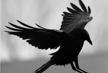 Crows ♥