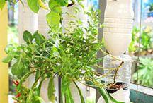 DIY Gardening / by Catherine Lemanski