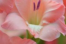 Plantas y más plantas / Vegetación para seducir a los sentidos  / by Adriana Caamaño