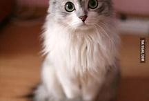 koty i inne słodziaki