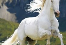 Horses...beauty and graceful
