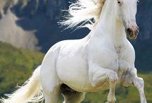 adoro i cavalli