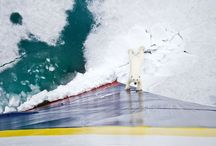 High Arctic / by Lindblad Expeditions