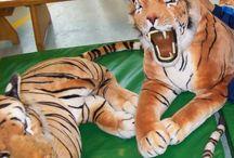 thema dierentuin  kleuterplein