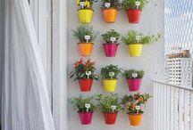 Apartment Herb Garden  / by Jamie Fletcher