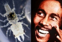 Creepy-Crawlies Named for Famous People