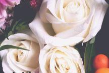 Flower Language Friday on Instagram...