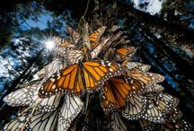 All God's Critters - Butterflies / by Kay Hough