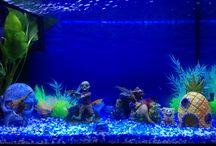 fish tank .........mine