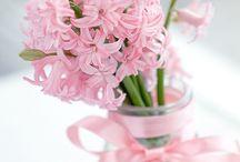 *Hyacinths*