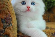 Beautiful Cats / Pictures Of Stunning Cats