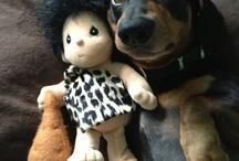 #Dachshund ❤️❤️ / My Robbie & + Dachshunds :)) #Dachshund