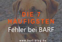 Dog Infos