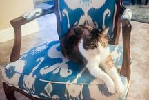 Portilla Cats With Furniture / Cats with furniture being silly