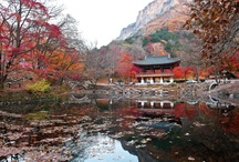 Still to see in Korea