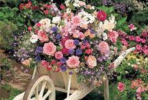 Decoration fleurs brouette