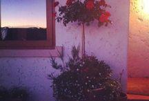 Jardín casa  / Chile