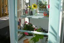 Tomat-'drivhus' / greenhouse
