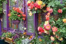 Flowery Windows & Potted Flowers... / by Cynthia