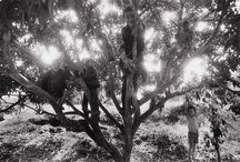 Sebastiao Salgado / Photographer - Humanist -