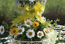 solo fiori
