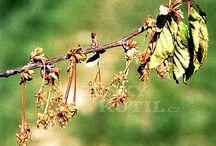 Choroby rastlin