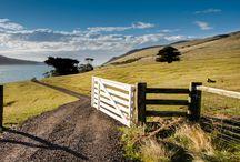 NZ Farm