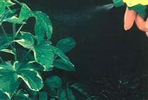 Plants / by Joan Jerome