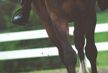 lovas háttér