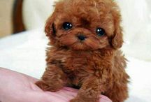 Cute puppy's