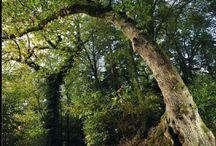 Le bois de Penfoulic