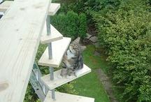 schody kocie