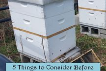She Farms Bama: Blog / Female Farmer, Farmher, Farming, Honey, Honey Bees, Honeybees, Beekeeper, Beekeeping, Apiary, Pollinator, Beehive, Worker Bee, Drone Bee, Queen Bee, Beeswax, Beeswax crafts, Cow, Cows, Angus, Artificial Insemination, Calves, Calf, Calving, Calving Season, Beef, Freezer Beef, Purchase Beef, Private Treaty, Grass Fed Beef, Antibiotic Free, No Hormones, Farm, Farm life, Farm kid, Farm House, Décor, Barn, Photography, Craft, Sewing, Crochet, Educational, School, Homeschool, Gift