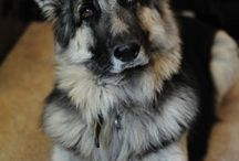 Super adorable furry ft / A life lived in the company of dog(s) is a life well lived!