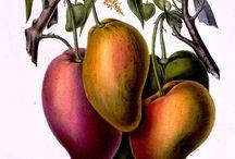 Botanical Illustrations / by Mandy Chan