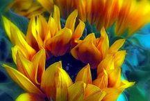 Flowers / All flowers. / by Kirsten van Miltenburg-Jonkers
