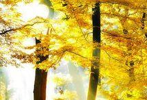 příroda - stromy, hory