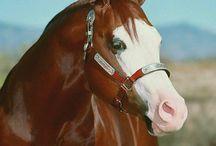 Animals / by Shelley Brock