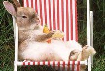 out door bunny