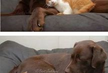 kutyák ès macskàk&